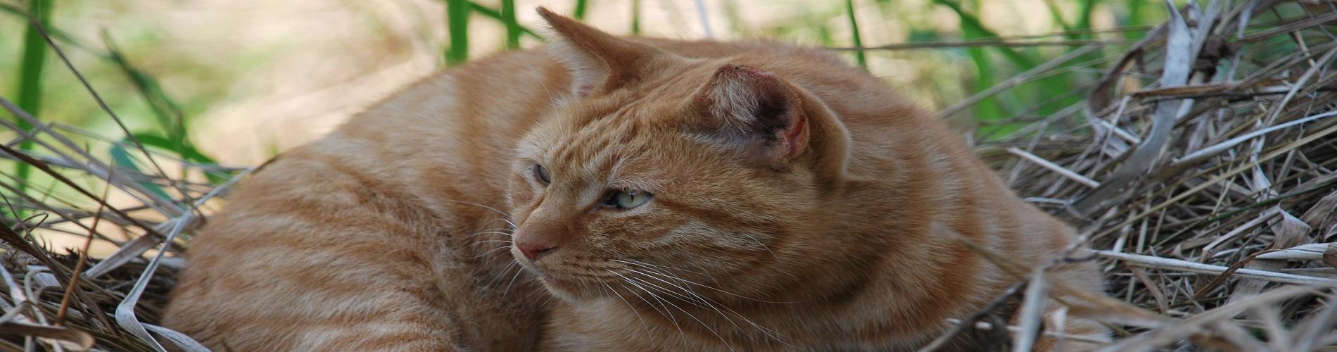 袖ヶ浦公園のネコです
